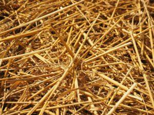 abgedroschenes Zuckerrohr oder Stroh. Der Nutzen ist eher begrenzt.